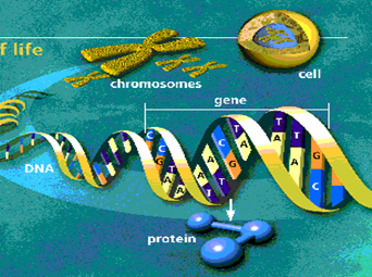 Sequencing of Human Genome