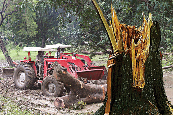 Felling of Trees along the Lahore Canal