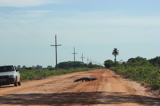 Pantanal: in search of jaguars