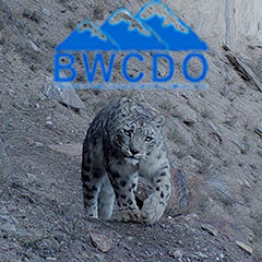 Saving the snow leopard: the role of the BWCDO