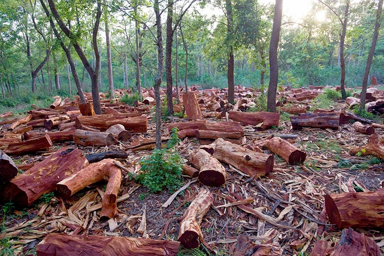 70 Years of Environment and Climate in Pakistan - Deforestation in Pakistan