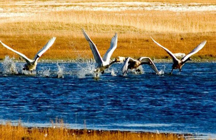 巴音布鲁克  水草丰美的天鹅故乡