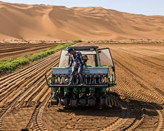 Growing Rice at the Foot of Sand Hills in Xinjiang, China