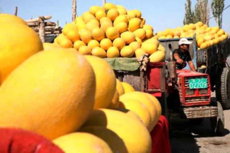 Hami melons at a market in Nanhu township of Hami City - Hami - the East Gate of Xinjiang
