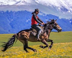 Horse Culture Tourism Booming in Xinjiang