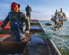 Internet+ helping Fuhai Fishery to Embrace a New Opportunity