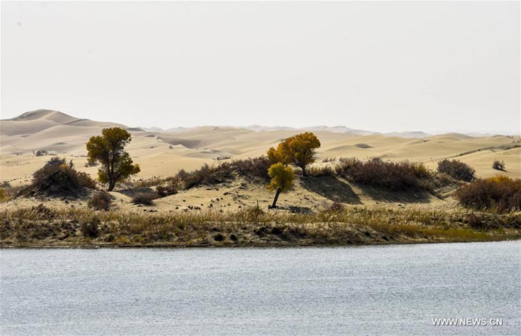 Plants are seen near the Daxihaizi Reservoir on the Tarim River
