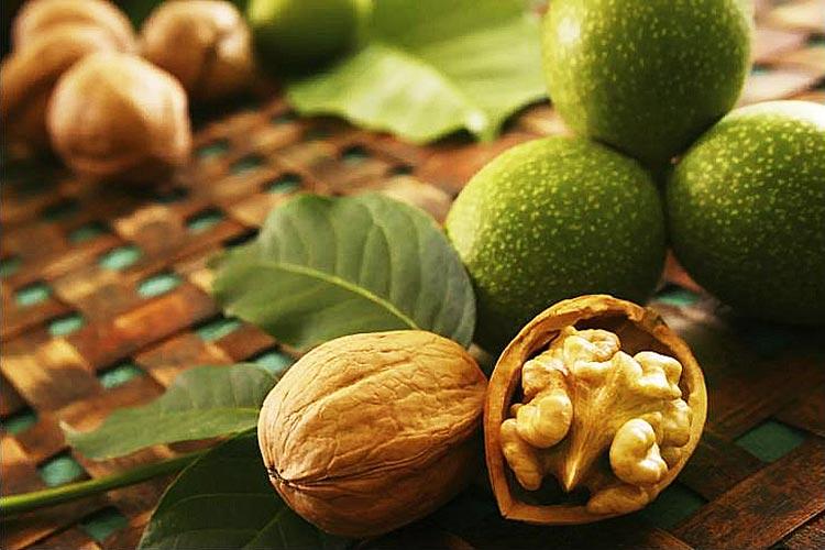 The Walnut Trees of Xinjiang - Youlin Magazine