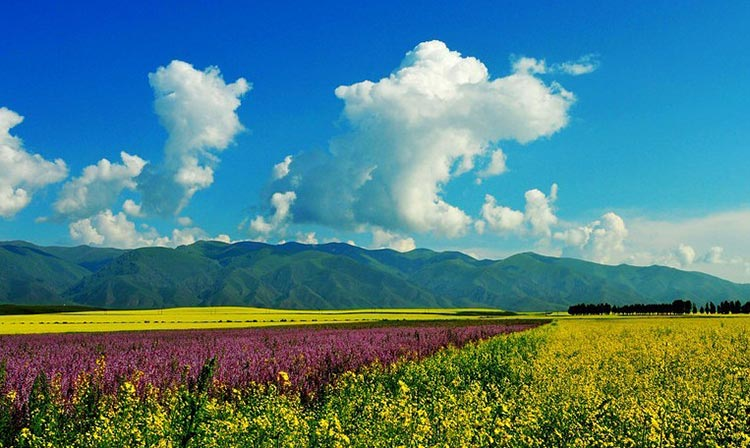 Tangbula Grassland - Top Quality Travel Routes in Xinjiang