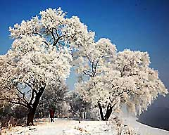 Visit the Best Snowscapes in China