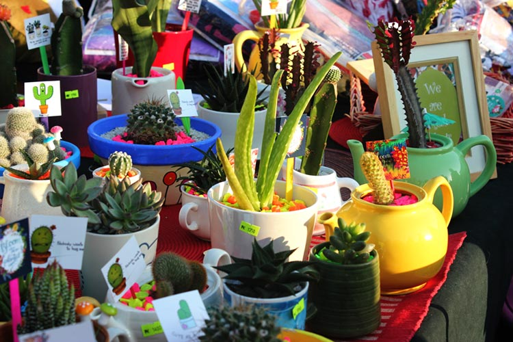 Succulent Plants and Cactuses by Pebbles and Pots