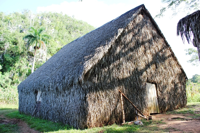 Hut for drying tobacco