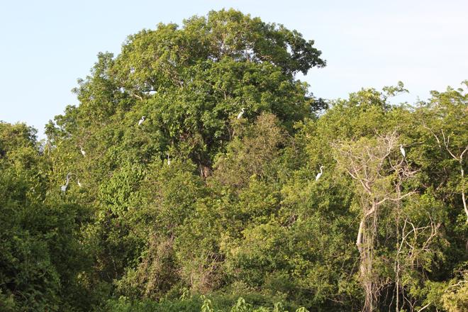 Pantanal: in search of jaguars