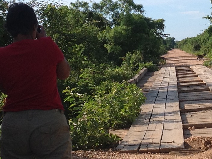 BRAZILIAN ODYSSEY: PART III - PANTANAL: IN SEARCH OF JAGUARS